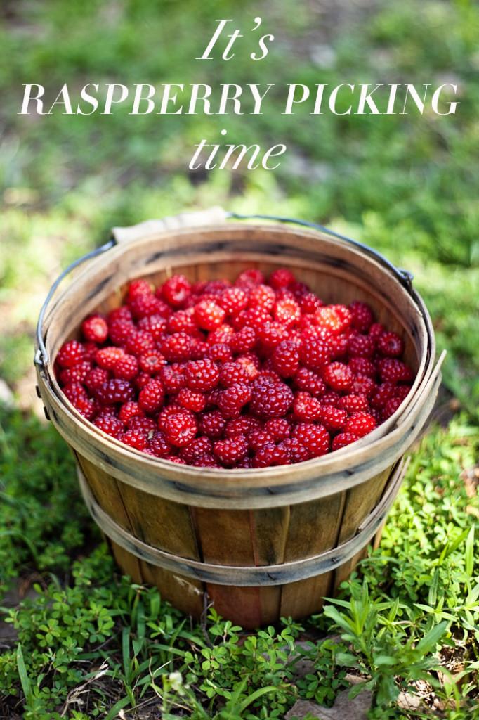 raspberries-2